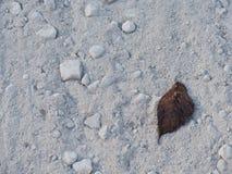 在土路的最小的叶子 免版税库存图片