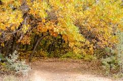在土道路的秋天叶子 库存照片