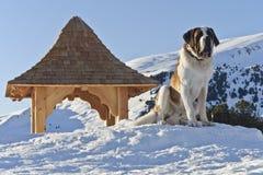 在圣・伯纳多狗和白云岩的日落 库存图片