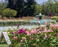 在圣何塞玫瑰园,圣何塞加利福尼亚的喷泉 免版税库存照片