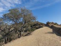 在圣加百利山附近的供徒步旅行的小道 库存照片