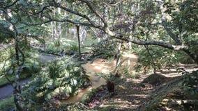 在圣地米格尔海岛上的热量水小河 免版税库存照片