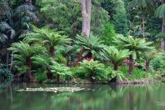 在圣地米格尔海岛,亚速尔群岛上的土地Nostra庭院 免版税图库摄影