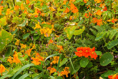 在圣地米格尔海岛, Atlanti北海岸的开花的植被  免版税库存图片