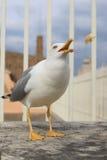在圣彼得罗圆顶顶部的海鸥,梵蒂冈 库存图片