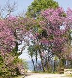 在圣徒康斯坦丁和海伦娜手段的春天 免版税库存照片