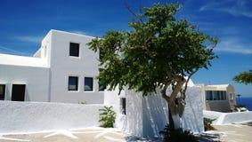 在圣托里尼海岛上的白色大厦Oia村庄和鲜绿色的树的在他旁边 免版税库存照片