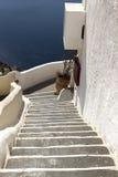 在圣托里尼海岛,基克拉泽斯,希腊的台阶 库存图片