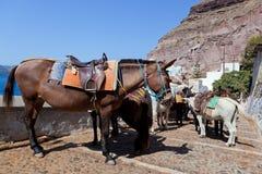 驴在圣托里尼海岛,希腊上的Fira 库存图片