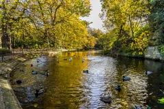 在圣斯蒂芬` s绿园,都伯林,爱尔兰的鸭子 免版税库存照片