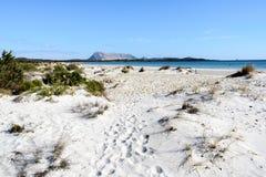 在圣特奥多罗,撒丁岛,意大利附近的沙滩 图库摄影