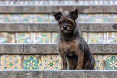 在圣玛丽亚del Monte楼梯的狗  图库摄影