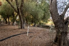 在圣胡安包蒂斯塔使命公墓,加利福尼亚,美国的十字架 免版税图库摄影