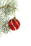 在圣诞树分支的红色球 库存图片