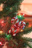 在圣诞树特写镜头的红色和白色棒棒糖 免版税图库摄影