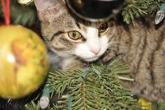 在圣诞树的小猫 免版税图库摄影
