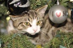 在圣诞树的小猫 免版税库存图片