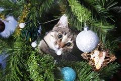 在圣诞树的猫 淘气的小猫 新年度 免版税库存照片