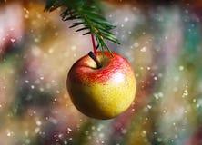在圣诞树绿色分支的甜苹果 闪烁和雪作用 免版税库存照片