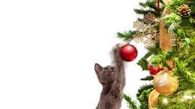 在圣诞树装饰品的滑稽的小猫打击 免版税库存照片