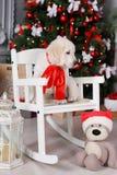 在圣诞树附近的一只金毛猎犬小狗 免版税库存图片