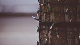 在圣诞灯的树套在Coeur d ` Alene准备好的爱达荷街道上圣诞节精神 免版税库存图片