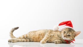 在圣诞老人响铃的猫  免版税库存照片