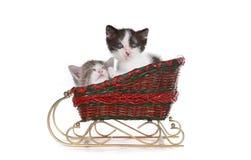 在圣诞老人圣诞节雪橇的小猫 免版税库存照片