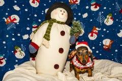 在圣诞老人帽子的一只可爱的达克斯猎犬小狗 库存图片