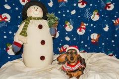 在圣诞老人帽子的一只可爱的达克斯猎犬小狗 免版税库存图片