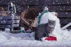 在圣诞老人帽子的圣诞老人猫 图库摄影