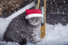 在圣诞老人帽子的圣诞老人猫 库存照片