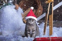 在圣诞老人帽子的圣诞老人猫 免版税图库摄影