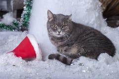 在圣诞老人帽子的圣诞老人猫 库存图片