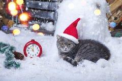 在圣诞老人帽子的圣诞老人猫 免版税库存照片