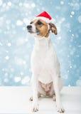 在圣诞老人帽子的圣诞节狗 免版税库存照片