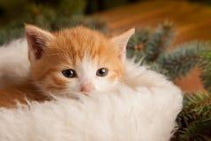 在圣诞老人帽子的姜小猫以圣诞节为背景 库存照片