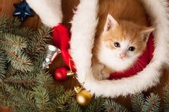 在圣诞老人帽子的姜小猫以圣诞节为背景 库存图片