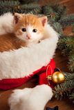 在圣诞老人帽子的姜小猫以圣诞节为背景 免版税库存照片