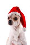 在圣诞老人帽子的小犬座奇瓦瓦狗 免版税库存图片