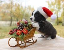 在圣诞老人帽子的小狗小狗 免版税库存照片