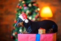 在圣诞老人帽子的小狗 免版税库存照片