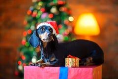 在圣诞老人帽子的小狗 库存照片