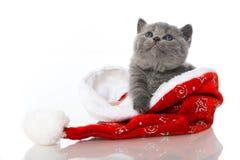 在圣诞老人帽子的小猫 免版税库存图片