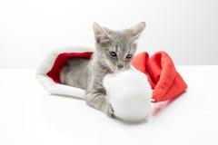 在圣诞老人帽子的小猫  免版税图库摄影