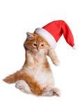 在圣诞老人帽子的小的小猫。 库存图片