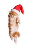 在圣诞老人帽子的小的小猫。 图库摄影