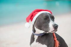 在圣诞老人帽子的狗在海滩 库存图片
