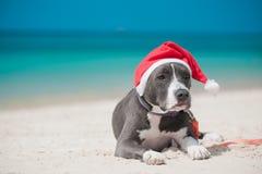 在圣诞老人帽子的狗在海滩 免版税库存照片