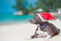 在圣诞老人帽子的狗在海滩 库存照片